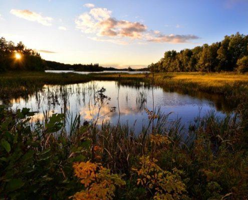 landscape-water-lake-nature-marsh-trees