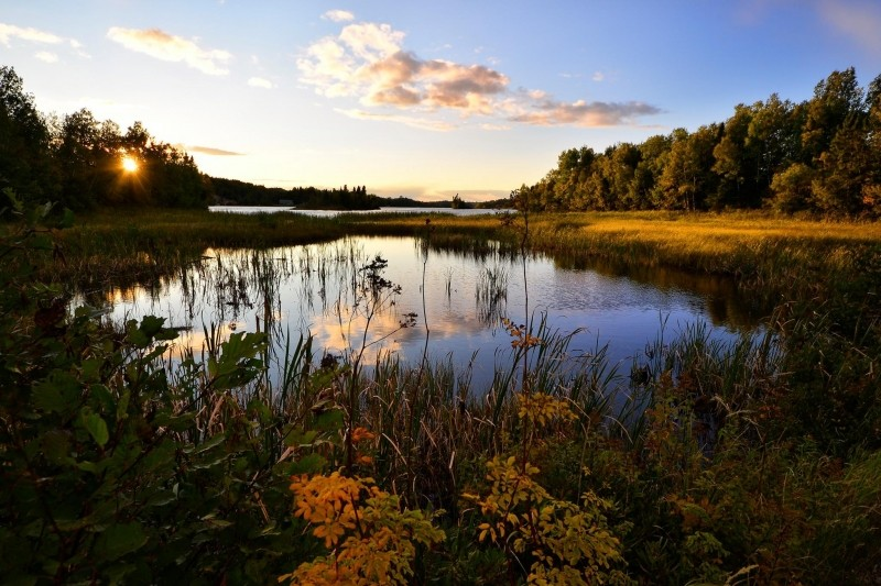landscape-water-lake-nature-marsh-trees
